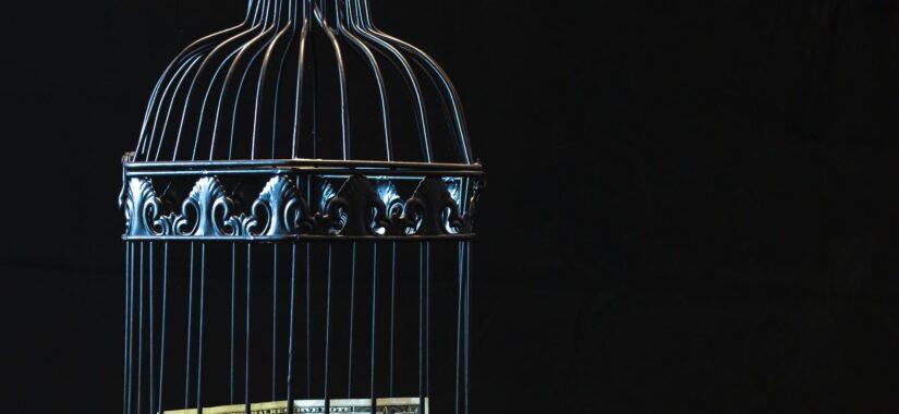 Penge låst inde i et fuglebur