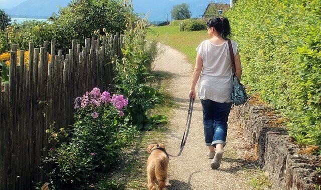 vandretur med hund
