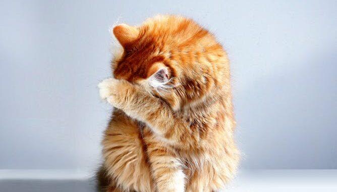 rød kat