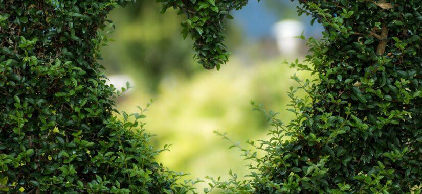 Hjerte i busk