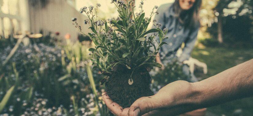 hånd planter og jord